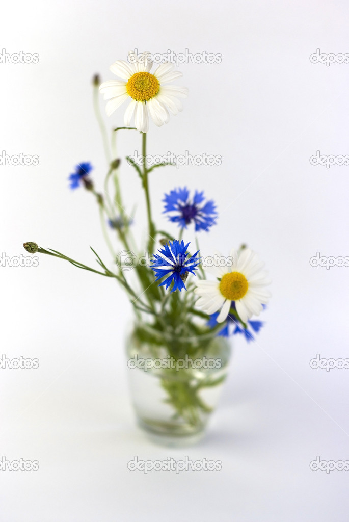 A bouquet of cornflowers and daisies on a white background — Stock Photo #9096201