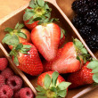 Stock Photo: Composition of berries