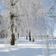 Stock Photo: Kreshchensky frosty day. Belarus.