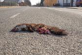 Martora morto 4 — Foto Stock