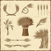 Kolekcja retro zbóż — Wektor stockowy