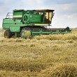 Combine harvester harvesting wheat cereal — Stock Photo