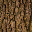 The bark of oak — Stock Photo