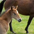 Stock Photo: Young horse foal or filly