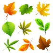Stock Vector: Different Leaf
