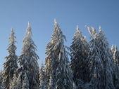 Trä på vintern — Stockfoto