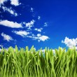 Green grass against cloudy sky — Stock Photo