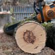 Stock Photo: Man cuts tree with electric saw