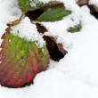 Leaves in snow — Stock Photo #8675333