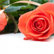 Foto de Stock  : Red roses isolated