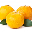 Fresh orange mandarin — Stock Photo