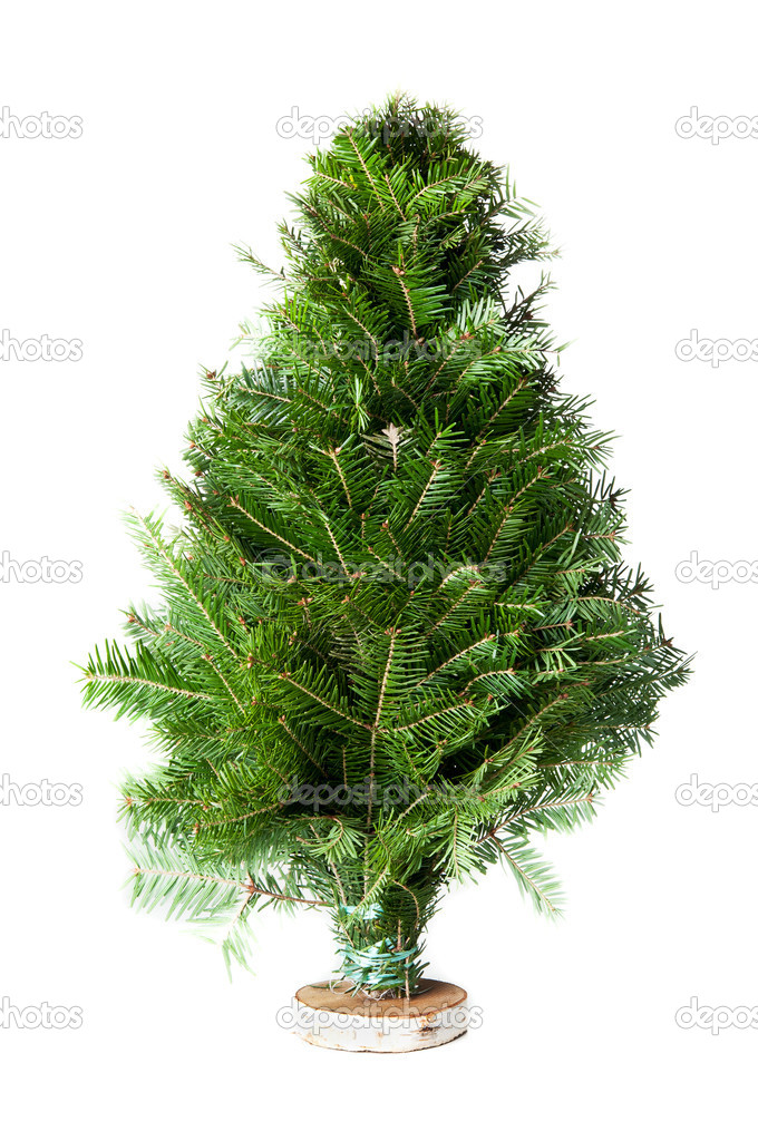 Green fir-tree isolated on a white background — Stock Photo #9163397