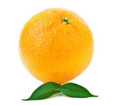 Fresh orange fruit — 图库照片