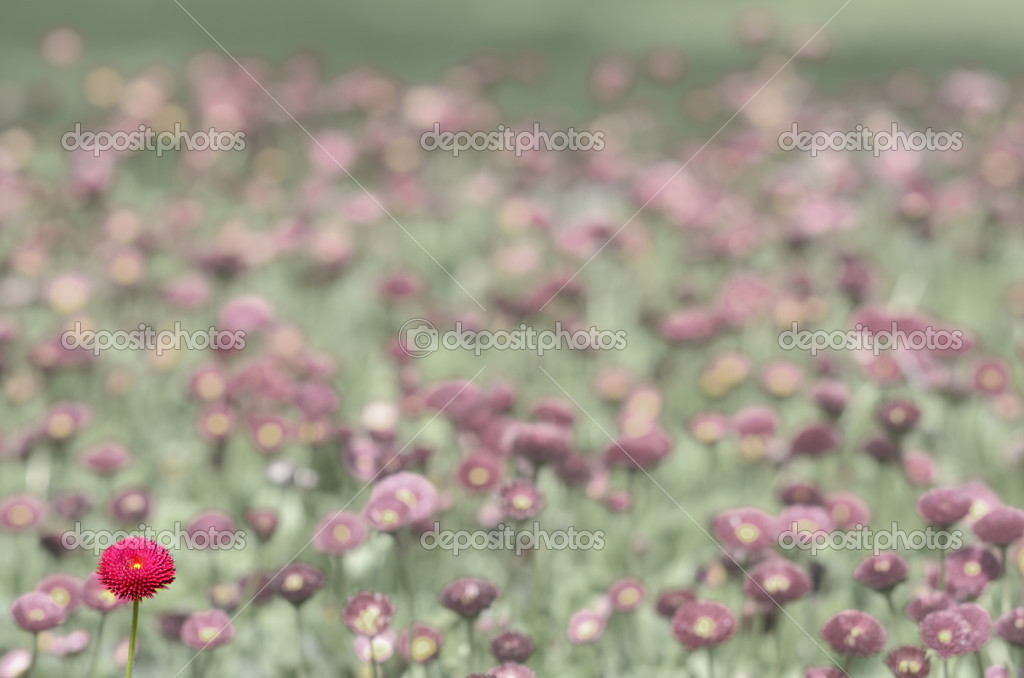 A lot of red flowers — Stock Photo #8061597
