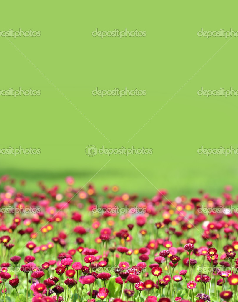 Many alive red flowers in and out of focus — Stock Photo #8061625