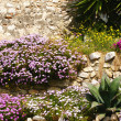 Stock Photo: Massif of flowers in Sitges