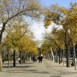Autumn in Barcelona — Stock Photo