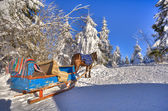 A horse and cart are in the snow-bound fir-trees of Carpathians — Stock Photo