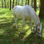 Horse — Stock Photo #9279592