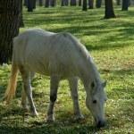 Horse — Stock Photo #9279594