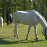Horse — Stock Photo #9279596