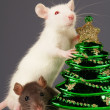 Rats on holiday — Stock Photo
