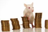 Rat with coins — Stock Photo