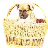 Puppie — Stock Photo