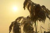 пейзаж на фоне солнца — Стоковое фото