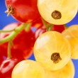 Stock Photo: Red and yellow currant