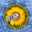 Dollar on a background of sunflowers - Stock Photo