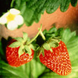 Stock Photo: Strawberry,