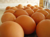 Many eggs — Stock Photo