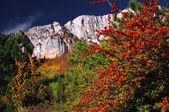 Autumn, — Stock Photo