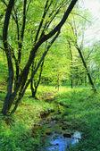 Spring, — Stock Photo