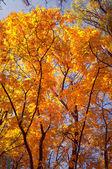 Güzel ağaç — Stok fotoğraf