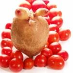 Potato, tomato — Stock Photo #9364660