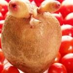 Potato, tomato — Stock Photo #9364662