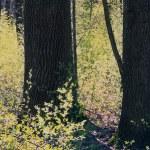 Tree — Stock Photo #9365838