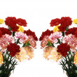 Stock Photo: Carnations