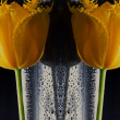 Stock Photo: Symmetry tulips