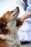 Animales domésticos — Foto de Stock