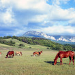 Horses — Stock Photo #9435829