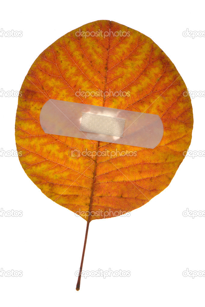 Red leaf on a white background — Photo #9502682