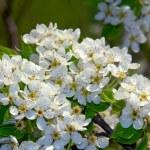 Flowers ðear — Stock Photo #9511020