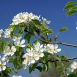 Flowers ðear — Stock Photo #9511023