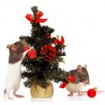 在白色背景上的老鼠 — 图库照片
