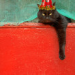 Black cat on a red background — ストック写真
