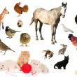 Animal farms — Stockfoto #9516656
