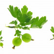 Ripe gooseberry with leaf on. — Stock Photo #9517362